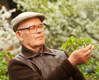 Happy elderly man. In a garden royalty free stock photography