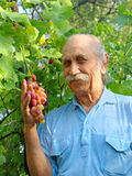 Happy elderly man holds a ripe grape. Stock Photography