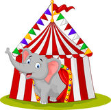 Happy elephant in the circus tent Royalty Free Stock Image
