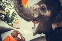 Happy elephant with open mouth and sad monk Stock Image