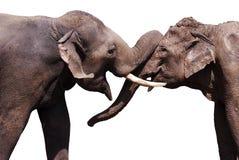 Happy elephants. Two elephant isolated on white background Royalty Free Stock Photo