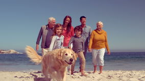 Happy extended family walking with dog. On the beach stock footage