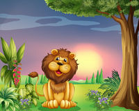 A happy face of a lion Stock Images