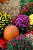 Happy Fall stock photo