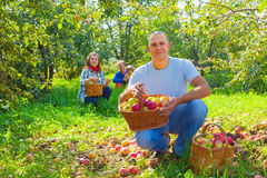 Happy  family  with apple harvest Stock Photo