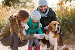 Happy family with beagle dog outdoors in autumn. Family, pets and people concept - happy mother, father and little daughter with beagle dog outdoors in autumn stock image