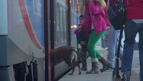 Happy family with dog boarding train, traveling on vacation, slow motion. Stock footage stock video