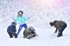 Happy family with dog outdoors in a snowy forest. Mother, fother, son and big pet dog. Giant Caucasian Shepherd Dog royalty free stock photo