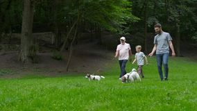 Happy family of father grandfather and son with Jack russel terrier dog having fun, laughing, running, walking together stock video