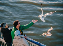 Happy family feeding seagulls on a ferry. Very friendly seagull takes food from man's hand. Royalty Free Stock Photo