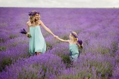 Happy family in a field of lavender. Mom and daughter in a field of lavender royalty free stock images