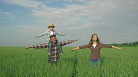 Happy family in field, smiling male with child boy on shoulders and female with arms to side walk in green grain field stock footage