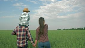 Happy family in field, young daddy with child boy on shoulders and mom walk in green grain field stock footage