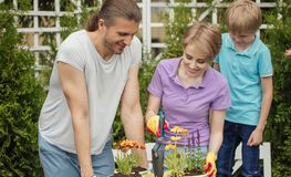 Young mother gardening in front or back yard with her two cute little children. Happy family gardening together and taking care of flowers and plants in their royalty free stock images