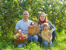 Happy family gathers apples Royalty Free Stock Photography