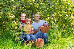 Happy family with  harvested apples Royalty Free Stock Image