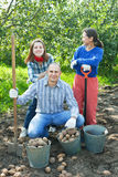 Happy family harvesting potatoes Stock Photo