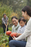 Happy family harvesting vegetables in garden Stock Images