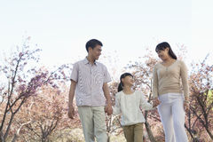 Happy family holding hands and taking a walk amongst the cherry trees in a park in springtime, Beijing Royalty Free Stock Image
