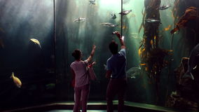 Happy family looking at fish and taking pictures stock video