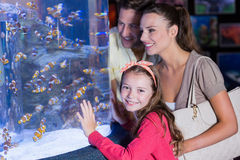 Happy family looking at fish tank. At the aquarium royalty free stock image