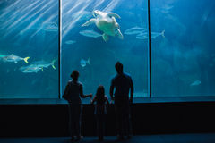 Happy family looking at fish tank Royalty Free Stock Photography