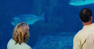 Happy family looking at fish tank. At the aquarium stock footage
