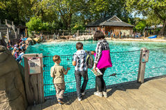 Happy family looking at humboldt penguins at the zoo stock photo