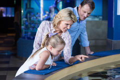 Happy family looking at manta ray Stock Photos