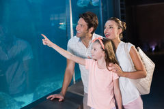 Happy family looking at shark Stock Images