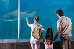 Happy family looking at shark Stock Photo