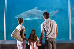 Happy family looking at shark Royalty Free Stock Photos