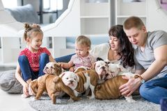 Happy family lying on carpet with puppies of English bulldog Stock Photos