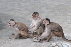 Happy family in monkey's conception Royalty Free Stock Photo