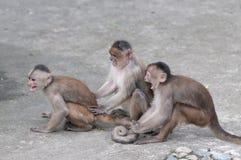 Happy family in monkey's conception. Happy family (in monkey's conception) in Misahualli, Amazon, Ecuador Royalty Free Stock Photo