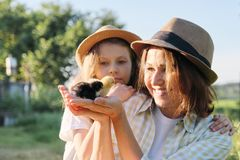 Happy family mother with daughter in nature, woman holding small newborn baby chicks in hands, farm, country rustic style stock photo