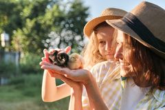 Happy family mother with daughter in nature, woman holding small newborn baby chicks in hands, farm, country rustic style royalty free stock photos