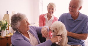 Happy family petting a dog stock video