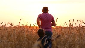 Happy family playing, running around the wheat field at sunset. The child catches up with his father. stock footage