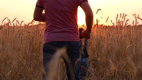 Happy family playing, running around the wheatfield at sunset. A man catches up with his son running away from him.