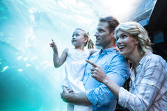 Happy family pointing a fish in the tank Royalty Free Stock Image
