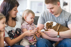 Happy family with puppies of English bulldog on his hands sitting on the couch.  Stock Photos
