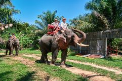 Happy family is riding an elephant. Dad and two cute sons go by on an elephant through the tropical jungle in sunny day. Concept of safari on elephants Royalty Free Stock Images
