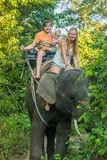 Happy family riding on an elephant, woman sitting on the elephant`s neck Stock Images