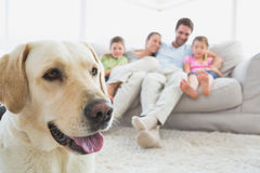 Happy family sitting on couch with their pet labrador in foreground Stock Photography