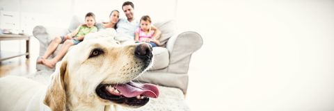 Happy family sitting on couch with their pet yellow labrador in foreground. At home in the living room stock photos