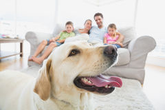 Happy family sitting on couch with their pet yellow labrador in foreground Stock Image