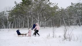 Happy family sledding on snowy winter day. Daughter helps father and mother to pull sled with son on snowfall. Boy