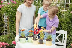 Young mother gardening in front or back yard with her two cute little children. Happy family spending weekend engaging with their hobby - gardening. Planting and royalty free stock image