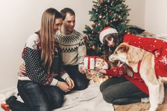 Happy family in stylish sweaters and cute dog having fun at chri. Stmas tree with lights. atmospheric emotional moments. merry christmas and happy new year Royalty Free Stock Images